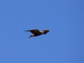 Eagle 20