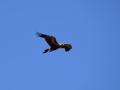 Eagle 21