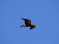 Eagle 23