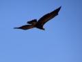 Eagle 27
