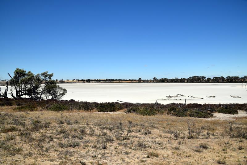 salt swamp Jeparit 1