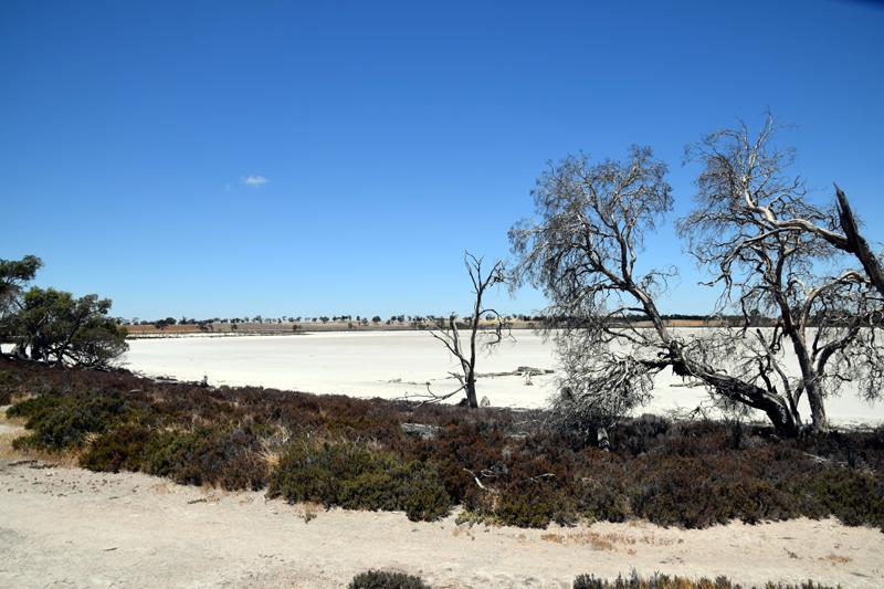 salt swamp Jeparit 2