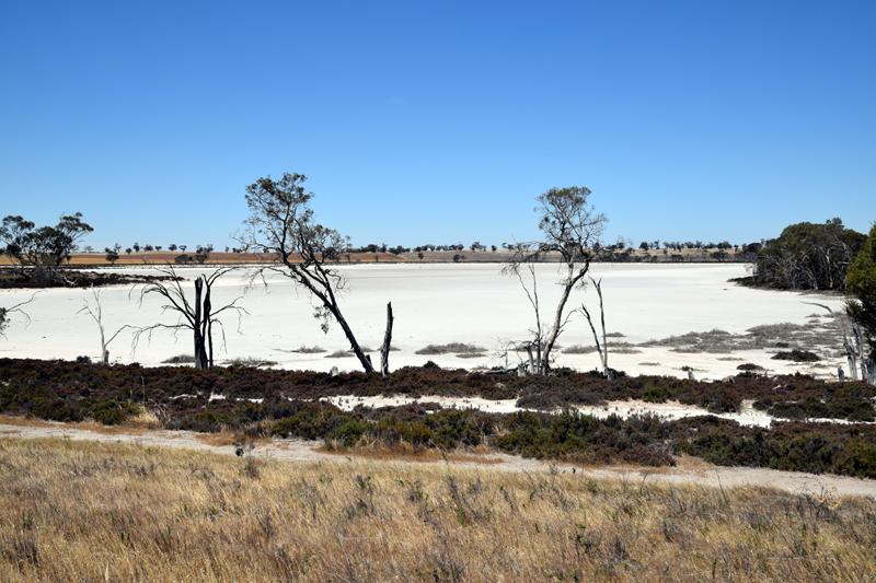 salt swamp Jeparit 4