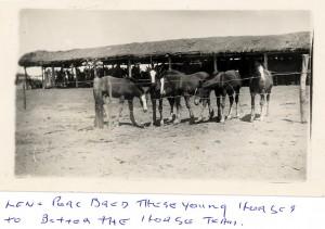 Lens Horses